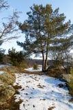 Snow-covered wegmiso rotsen en bomen aan de rivier Stock Foto