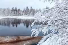 Snow-covered white branches of tree on winter lake Stock Images