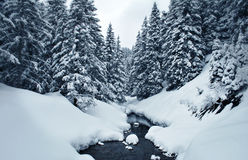 Snow covered winter forest Stock Photos