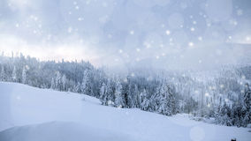 Snow covered winter forest Royalty Free Stock Photos
