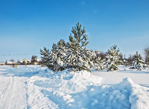 Snow-covered winter  landscape. Beautiful fluffy fir-trees, to Moscow area Royalty Free Stock Images