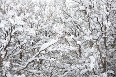 Snow covered winter landscape Royalty Free Stock Photos