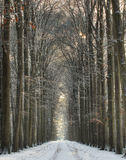 Snow covered winter lane Royalty Free Stock Images