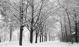 Snow covered winter lane Stock Photography