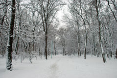 Snow-covered winter park Stock Photography