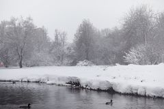 Snow-covered winter park and benches. Park and pier for feeding. Ducks and pigeons. The snow covered the autumn park.r Stock Photo