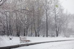 Snow-covered winter park and benches. Park and pier for feeding Stock Photography
