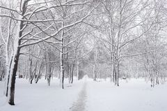 Snow-covered winter park and benches. Park and pier for feeding Stock Photo