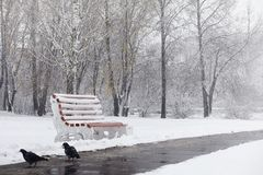 Snow-covered winter park and benches. Park and pier for feeding Royalty Free Stock Image