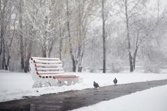 Snow-covered winter park and benches. Park and pier for feeding Stock Image