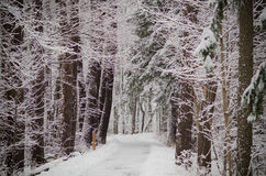 Snow Covered Winter Path Royalty Free Stock Photography