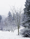 Snow-Covered Winter Trees Along the Road Royalty Free Stock Photos