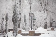 Snow-covered winter trees on a city boulevard Stock Photo