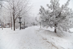 Snow-covered winter trees on a city boulevard Stock Photos
