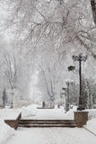 Snow-covered winter trees on a city boulevard Royalty Free Stock Photography