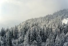 Snow covered winter trees in the foreground frame a perfect winter scene as a snowy alpine mountain tops peak. Through the clouds and mist in the background royalty free stock image