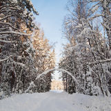 Snow covered  winter wood Royalty Free Stock Images