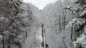 Snow-covered winter wooden alley with a road stock video