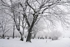 Snow covered wintry forest Stock Image