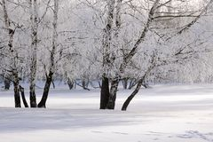 Snow covered wintry forest Stock Photo