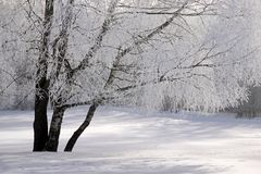 Snow covered wintry forest Stock Images