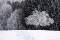 Snow covered wintry forest Royalty Free Stock Images