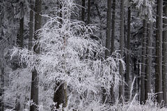 Snow covered wintry forest Stock Photos