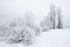 Snow covered wintry landscape. Wintry landscape with shrubs and trees covered with hoar Stock Images