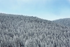 Snow covered wonderland forest in mountains. Landscape stock images