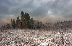 Snow-covered wood against the cloudy sky. Royalty Free Stock Photo