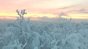 The snow-covered wood with quickly floating clouds. stock video footage