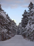 Snow covered wood road. Winter landscape with snow covered wood road Royalty Free Stock Image