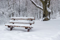 Snow covered wooden sitting bench in park 3 Stock Photography