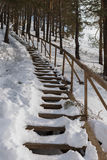 Snow-covered wooden staircase in pine forest. Royalty Free Stock Photo