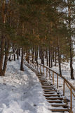Snow-covered wooden staircase in pine forest. Royalty Free Stock Images