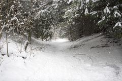 Snow covered woodland footpath Royalty Free Stock Photo