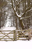 Snow covered woodland path Royalty Free Stock Images
