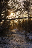 Snow covered woodland path at sunrise  Royalty Free Stock Photography