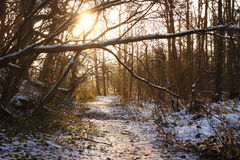 Snow covered woodland path at sunrise  Stock Photos