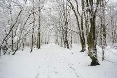 A snow covered woodland path on a winters day in Balls Wood, Hertford Heath, Uk. Snow covered woodland path on a winters day in Balls Wood, Hertford Heath, Uk Royalty Free Stock Photo