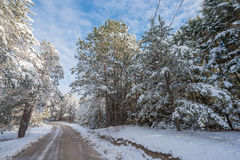 Snow covered woods - beautiful forests along rural roads. Stock Image