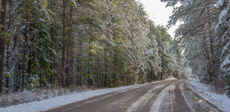Snow covered woods - beautiful forests along rural roads. Royalty Free Stock Photography
