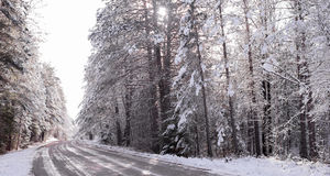 Snow covered woods - beautiful forests along rural roads. Royalty Free Stock Photos