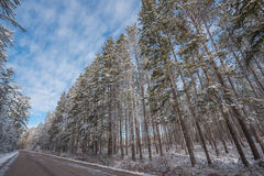 Snow covered woods - beautiful forests along rural roads. Stock Photography