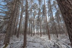 Snow covered woods - beautiful forests along rural roads. Royalty Free Stock Images