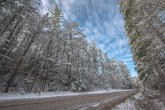 Snow covered woods - beautiful forests along rural roads. Stock Images