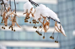 Snow-covered Zweig stockfoto