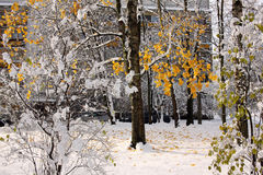 Snow covering trees and bushes. With autumn foliage Royalty Free Stock Photography