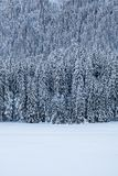 Snow covert forest near frozen lake Fusine in winter. In Italy Royalty Free Stock Images