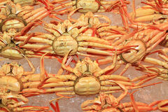 Snow crab Royalty Free Stock Photography